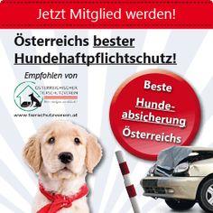Versicherung für den Hund, beste Hundehaltpflichtversicherung in Österreich Blog, Pet Dogs, Blogging