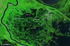 Signs of Katrina Linger in the Marshes 08/02/2015
