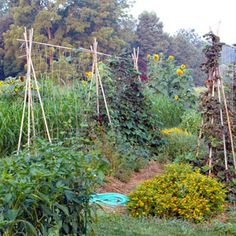 How to put the practices of permaculture to use in your own back yard. Combining the best of natural landscaping and edible landscaping, permaculture aims for a site that sustains itself. I like this trellis method