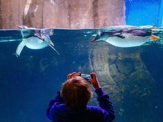 ¡Sumérgete sin mojarte! Observa miles de criaturas provenientes del Océano Meridional y adéntrate en los túneles de vidrio que te permitirán observar tanques llenos de tiburones, mantarrayas y tortugas acuáticas en este acuario de 2.2 millones de litros de capacidad.