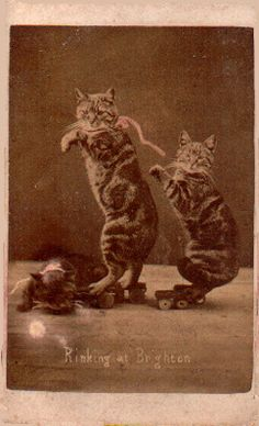 Rinking at Brighton by renowned Victorian cat photographer Harry Pointer, c. 1870 (via Retronaut)