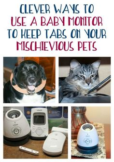 Did you know that baby monitors aren't just for monitoring brand new babies? They're also brilliant tools for keeping tabs on your furkids! #ad #GrowWithVTech