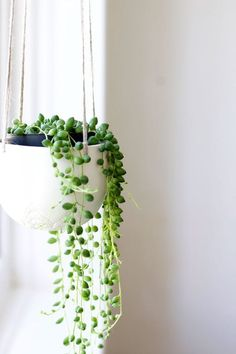 Save this to see why you should add trailing plants to your indoor garden at home.