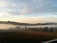 Willamette Valley Vineyards.. 11.27.2013