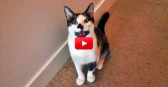 If It Walks Like A Dog, And Talks Like A Dog, Then It Must Be A…Cat? | The Animal Rescue Site Blog