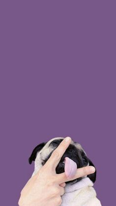 Wallpaper Whatsapp Backgrounds - i don't own this Tumblr Wallpaper, Wallpaper Pug, Tier Wallpaper, Animal Wallpaper, Iphone Wallpaper, Seagrass Wallpaper, Paintable Wallpaper, Colorful Wallpaper, Fabric Wallpaper