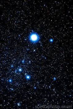Canis Major: Orion's Great Dog - Always ready to protect master - With shining eyes