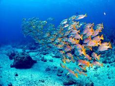 The diving here looks beautiful! #dive Cuba, Caribbean Photo by segon www.solymargalapagos.com