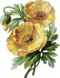Oblates shine image scrap the cut chromo flower flower fleur blossom flower: Victorian Flowers, Victorian Art, Vintage Flowers, Art Floral, Flower Images, Flower Art, Blossom Flower, Watercolor Flowers, Watercolor Art