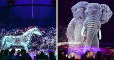 The Circus In Germany Is Using Holograms Instead Of Real Animals To Stop The Animal Abuse - World's largest collection of cat memes and other animals Live Animals, Animals Images, Flesh And Blood, Marvel, Fluffy Animals, Wild Horses, Animal Rights, Bored Panda, Cat Memes