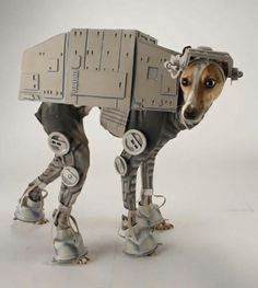 Dogs Wearing Costumes: katie-mello - star wars whippet