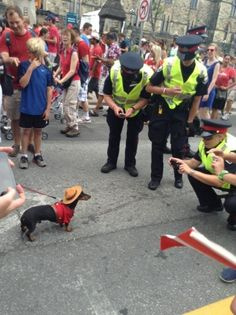 Funny pictures about Canadian Police On The Job. Oh, and cool pics about Canadian Police On The Job. Also, Canadian Police On The Job photos. Dog Memes, Funny Memes, Hilarious, Canada Jokes, Canada Eh, Canada Funny, Canada Post, Meanwhile In Canada, Police