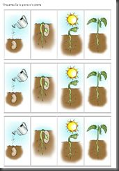 Etapes de germination