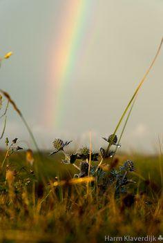 Thistle rainbow by Harm Klaverdijk on Flickr