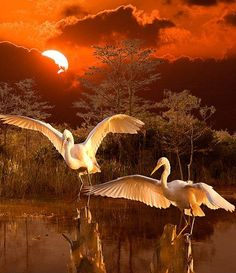 Florida Everglades,  Photo by, Susan Schermer , from Iryna via pinterest