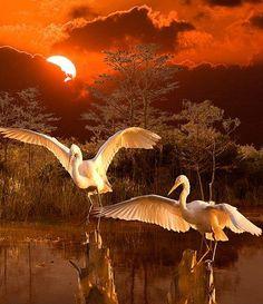 Florida Everglades,  Photo by, Susan Schermer