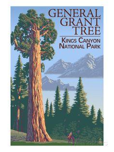 General Grant Tree - Kings Canyon National Park, California Prints at AllPosters.com