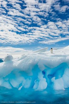 Adelie penguin on iceberg, Antarctica