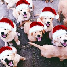This cute puppy golden retriever will make you happy. Dogs are fascinating friends. Christmas Puppy, Christmas Animals, Cozy Christmas, Christmas Morning, Christmas Time, Christmas Bedroom, Christmas Poster, Christmas Drinks, Christmas Design