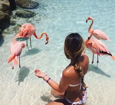 ✧☞ǁ @aestheticvibes101 ǁ☜✧ Pretty in Pink - Girl/tumblr/animal/flamingo/beach/sea/ocean/vacation/summer
