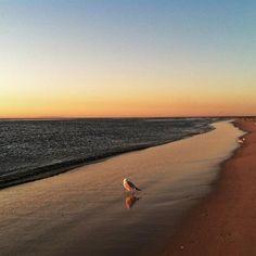 Solitude on the beach...
