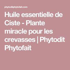 Huile essentielle de Ciste - Plante miracle pour les crevasses | Phytodit Phytofait
