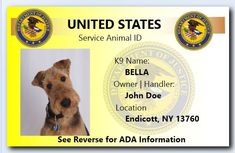 Service Dog Certification ID cards.  Custom Personalized ID Badge (set of 2). Give your dog credibility with these thermal infused (just like your driver's license) highly visible and colorful PVC ID cards that will last for years.