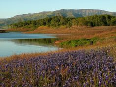 8 Great Wine Country Hikes to Do on your Next Trip to Napa Valley – Richard Partridge Wines