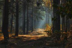 утро в лесу - Google-søgning
