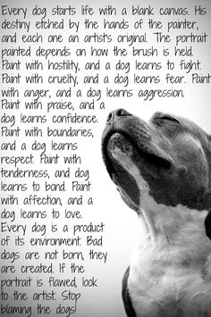 Stop blaming the dogs!