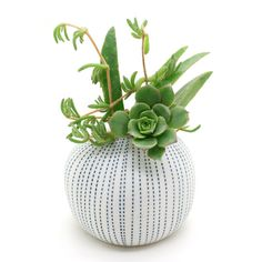 Porcelain Vase Pots Flower Pots Cactus Small by BloomyLifePottery