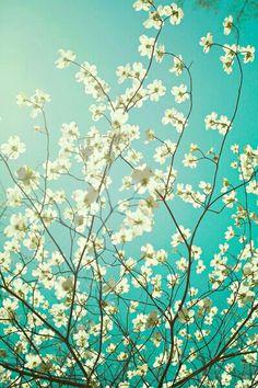 Flowers...