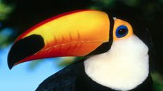 How do you like this beautiful bird?