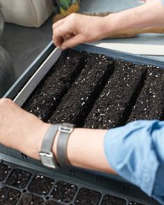 To get a jump start on spring,  start seeds in the greenhouse weeks before they will be transplanted outdoors.