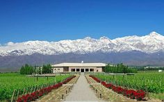 A Drinker's Guide To The World: Malbec, Argentina | Telegraph Travel - March 18, 2013