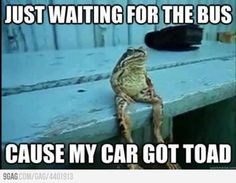 Just a normal life of a frog