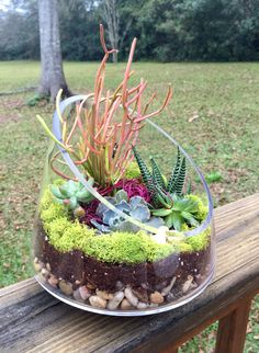Succulent garden in glass container
