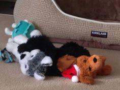 #Jackson❤️ Jackson, Snoopy, Cute, Dogs, Animals, Fictional Characters, Animais, Animales, Animaux