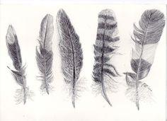 feather Drawing | 12.drawing 1 - detailed feather drawing