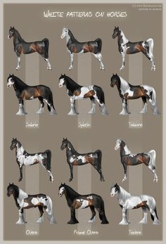 White patterns on horses by *Aomori on deviantART