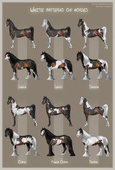 White patterns on horses by *Aomori on deviantART