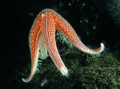 star fish - Google 검색