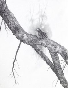 Backyard Birds and Songbirds Graphite Art, Graphite Drawings, Scratchboard Art, Pastel Pencils, Artist Profile, Backyard Birds, Pyrography, Art Sketches, Monochrome