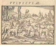 Wall art idea .. interesting classical illustrations of animals