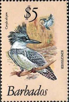 Barbados 1979 Birds SG 637 Fine Mint SG 637 Scott 510 Other West Indies Stamps HERE