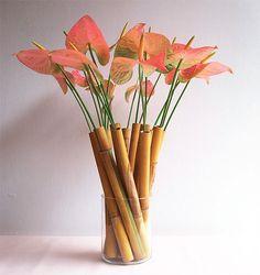 Pink Anthurium in bamboo tubes.
