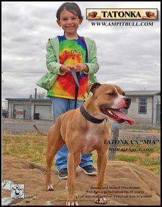 Pit Dog, Black Pitbull, American Pitbull, Dog Games, White Dogs, Pit Bulls, Pitbull Terrier, Animals And Pets, Best Friends