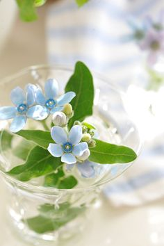 浮気してもいいかも~ ♪ | 幸せになるインテリア Tiny Flowers, Green Flowers, My Flower, Flower Power, Beautiful Flowers, Narcisse, Flowery Wallpaper, Birds In The Sky, Candle Centerpieces