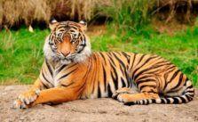 85 Ideas De Animales Varias Especies En 2021 Animales Mascotas Animales Bonitos