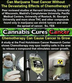 Cannabis does kill cancer if ingested internally. People like rick Simpson have been curing cancer with cannabis extract for years. Google him and his videos